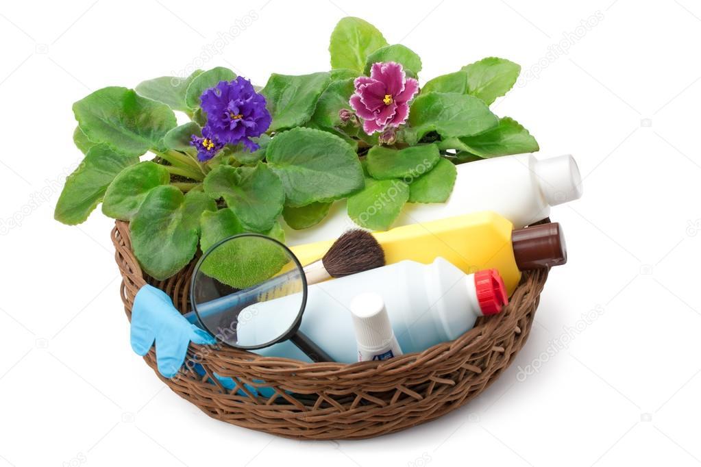 african violet saintpaulia chemical fertilizers, pesticides and