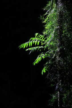 Bright Green Rainforest Tree Branches on Black Background