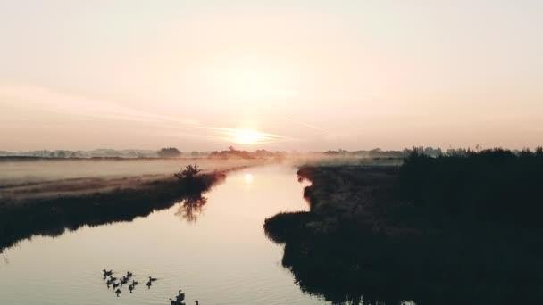 Letecký záběr venkovské holandské krajiny s mlhou při východu slunce, Nizozemsko. Voda a hráze s ptáky. Vysoce kvalitní FullHD záběry
