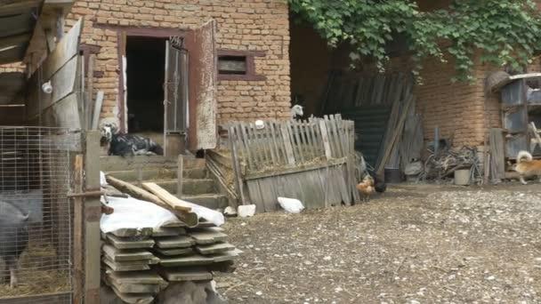 Nutztiere im Dorfhof