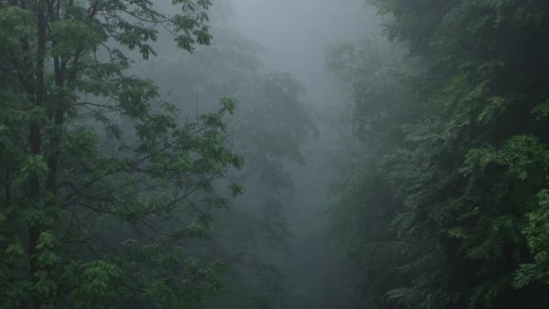 Dark Fog in Forest