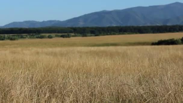 Suché travnaté divoké krajiny