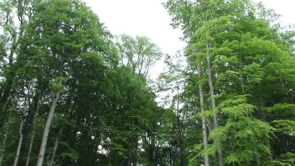 Zadání cesty k Deep Forest