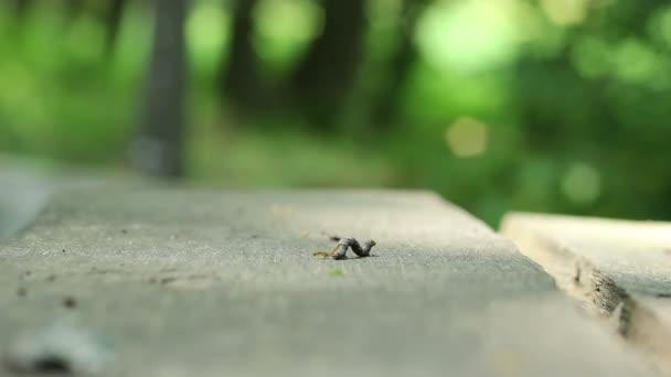 Erdő-féreg-féreg