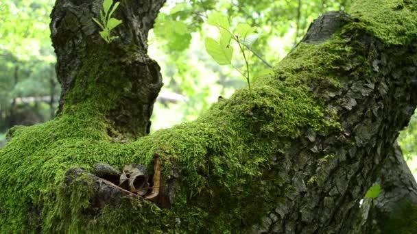 zöld moha a fán
