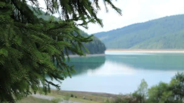 Green Pine Twigs on Green Lakeside