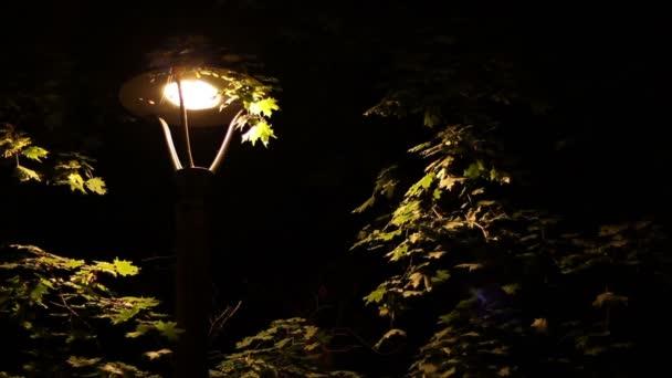 A következő reptér környékén: utcai lámpa rovarok