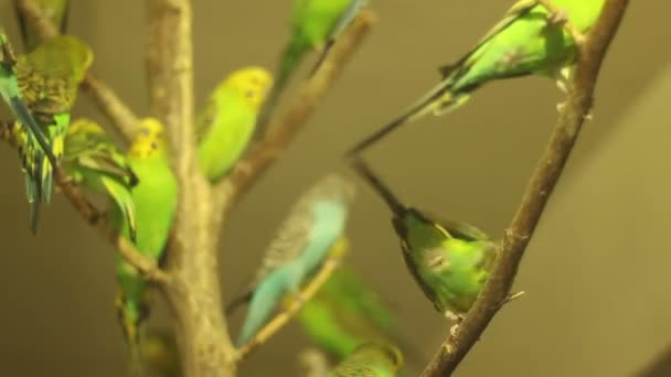 Spousta papoušků