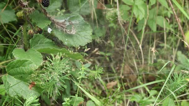Spinnen greifen Beute an