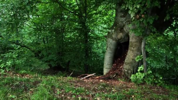 dutý strom
