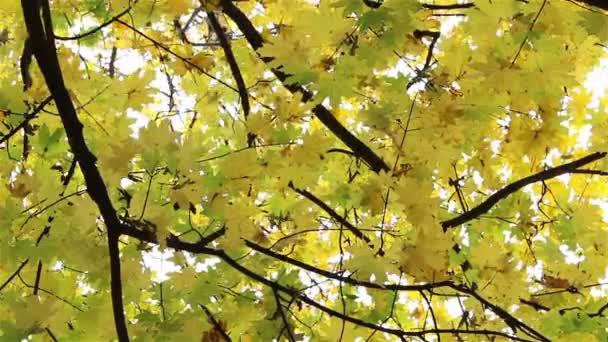 Podzimní listí spadající přes prohlížeč