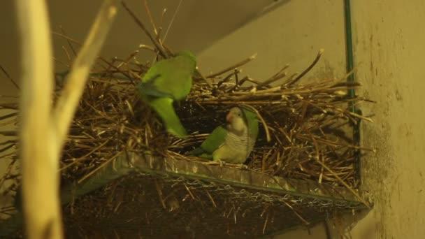 Papoušek hnízdo