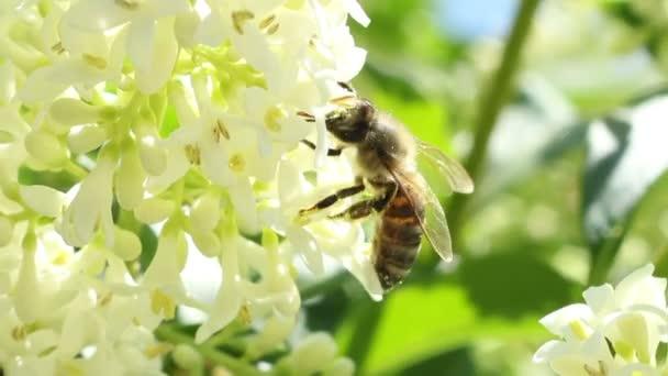 Méhkivonat pollen