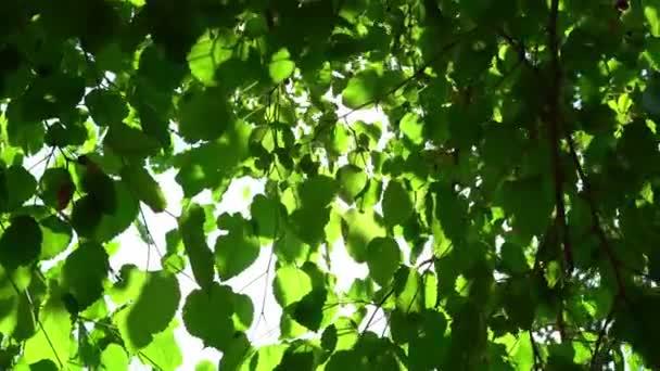 Krásné léto v lese.