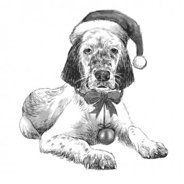 English setter with christmas hat