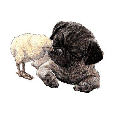 Pug dog ang a chick