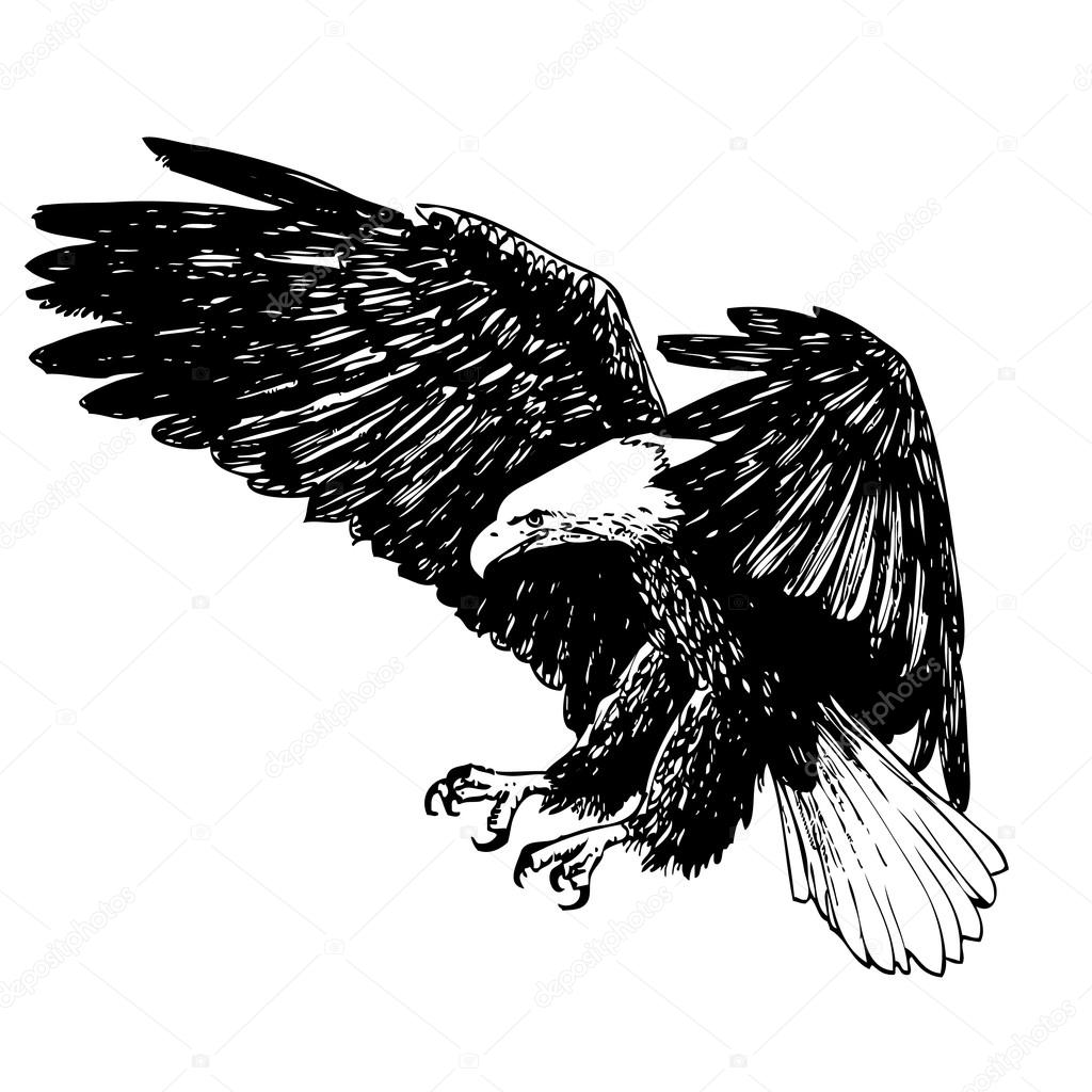 Black and white eagle hand drawn — Stock Vector © simpleBE ...