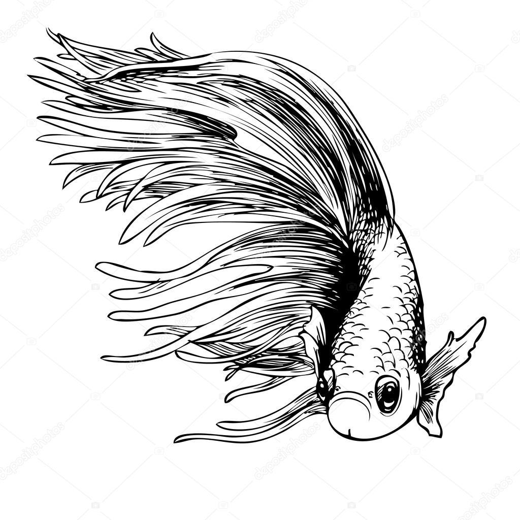 十二宫在线_暹罗斗鱼斗鱼芨芨草 — 图库矢量图像© simpleBE #85343396