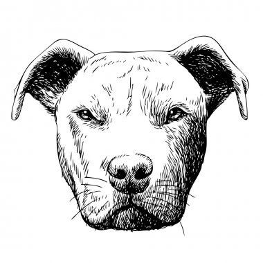 freehand sketch illustration of pitbull dog