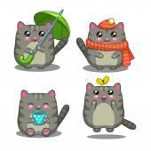 Süße fettgraue Katze in verschiedenen Aktivitäten
