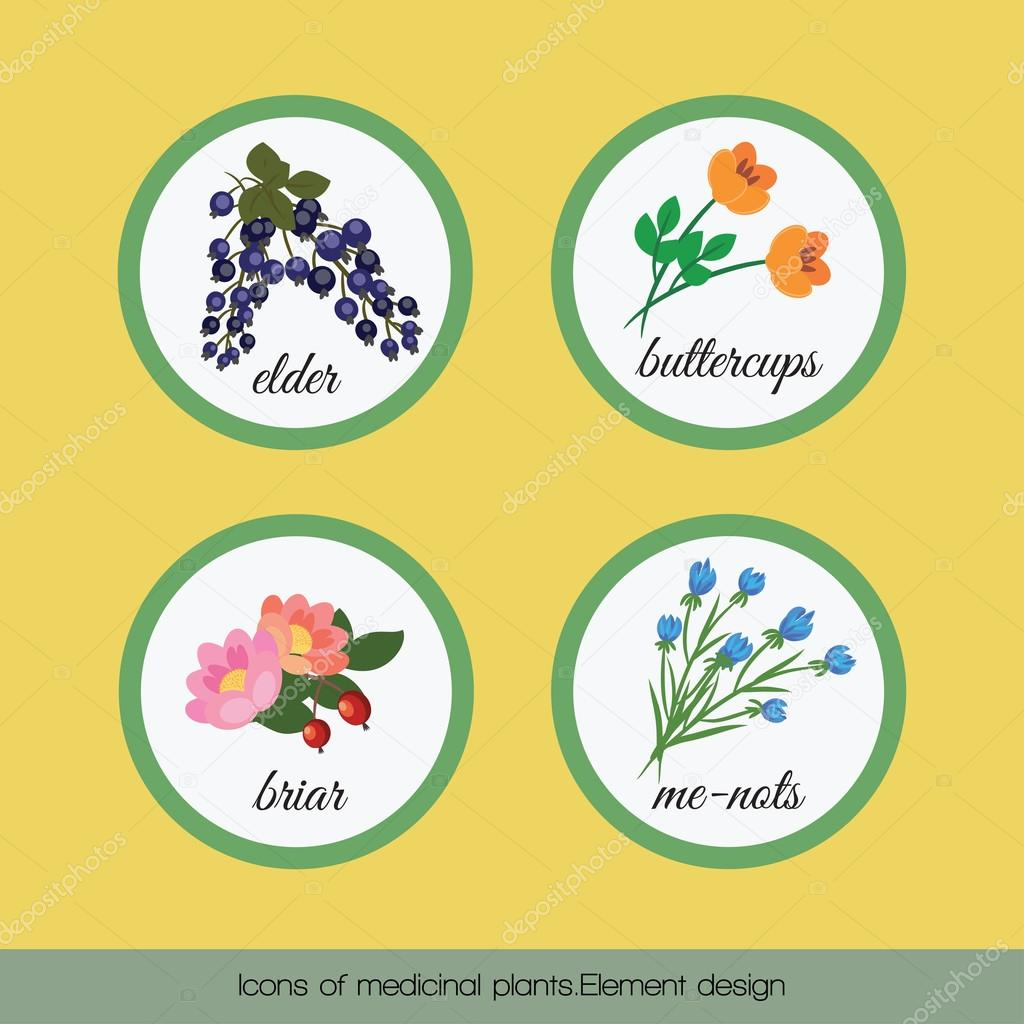 Icons of medicinal plants 2