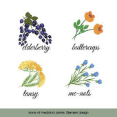 Icons of medicinal plants 4