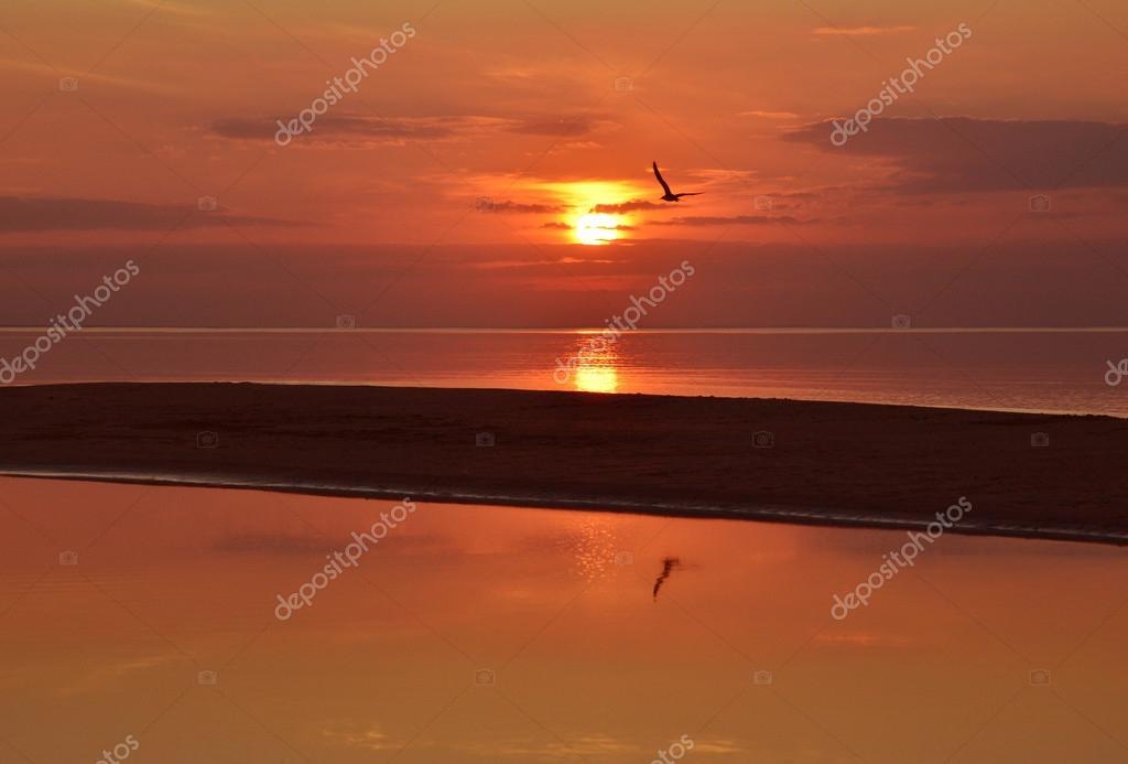 Sagoma di un gabbiano che vola sopra il banco di sabbia e mare calmo al tramonto o all 39 alba - Sopra un mare di specchi si vola ...