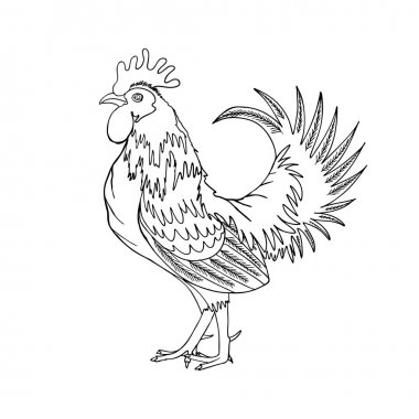 hand drawing cock or rooster