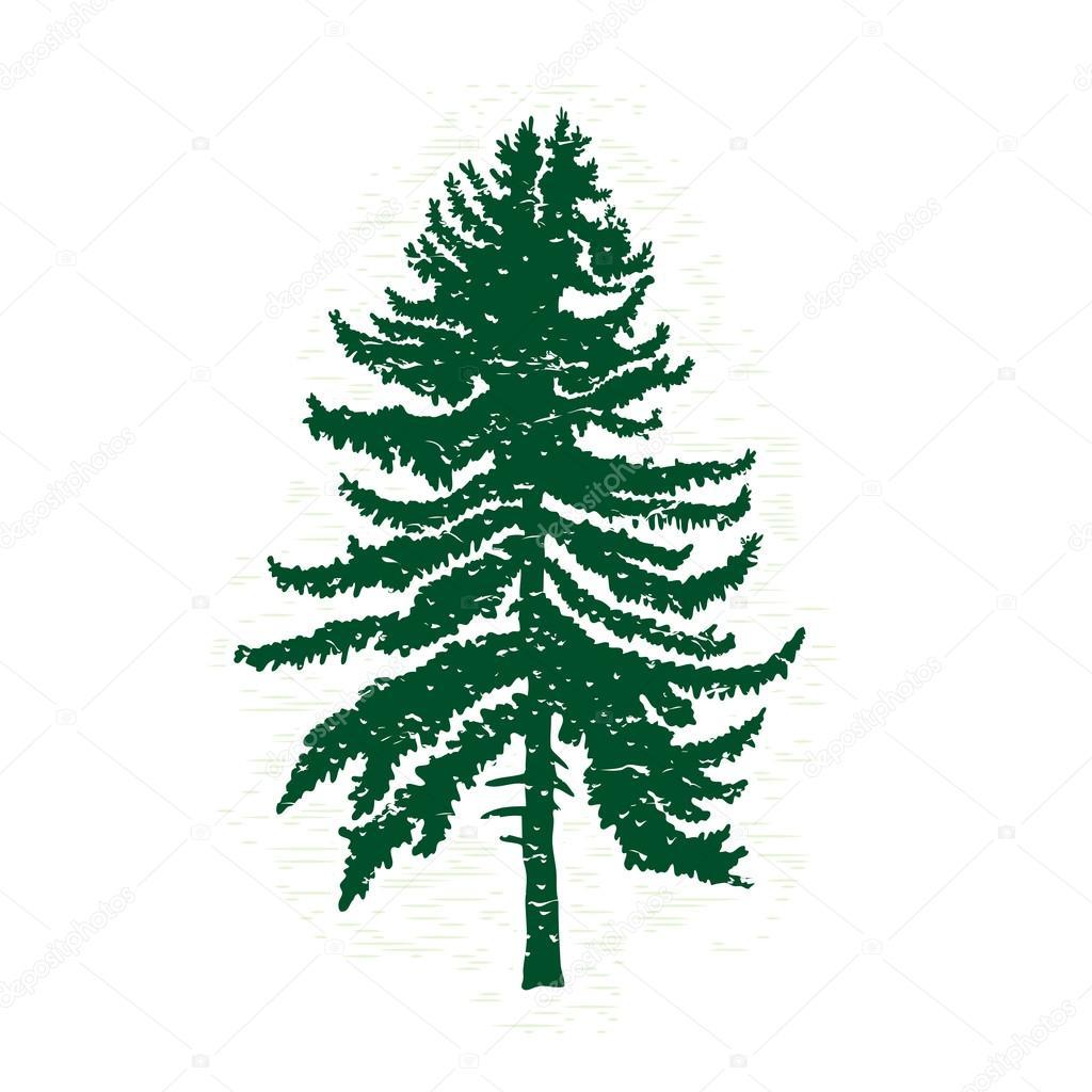Silueta de árbol de pino con textura — Archivo Imágenes Vectoriales ...