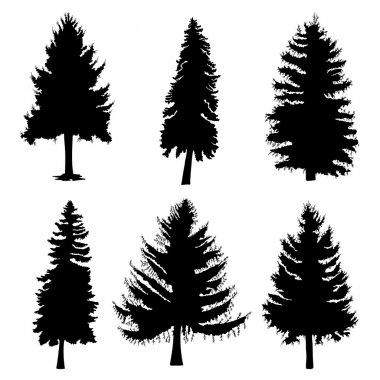 Fir trees silhouettes set