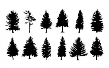 Set of different silhouettes of pine trees