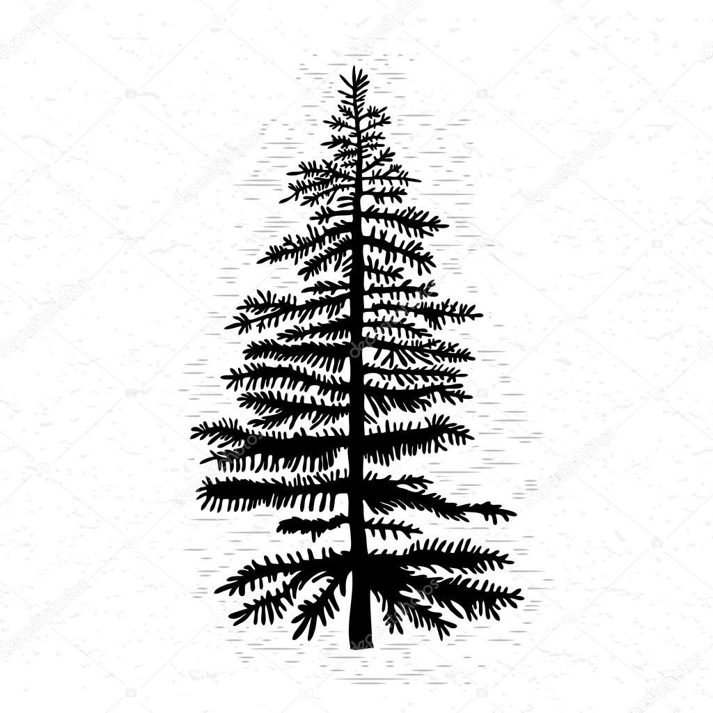 モミの木のイラスト ストックベクター Goldenshrimp 122345648