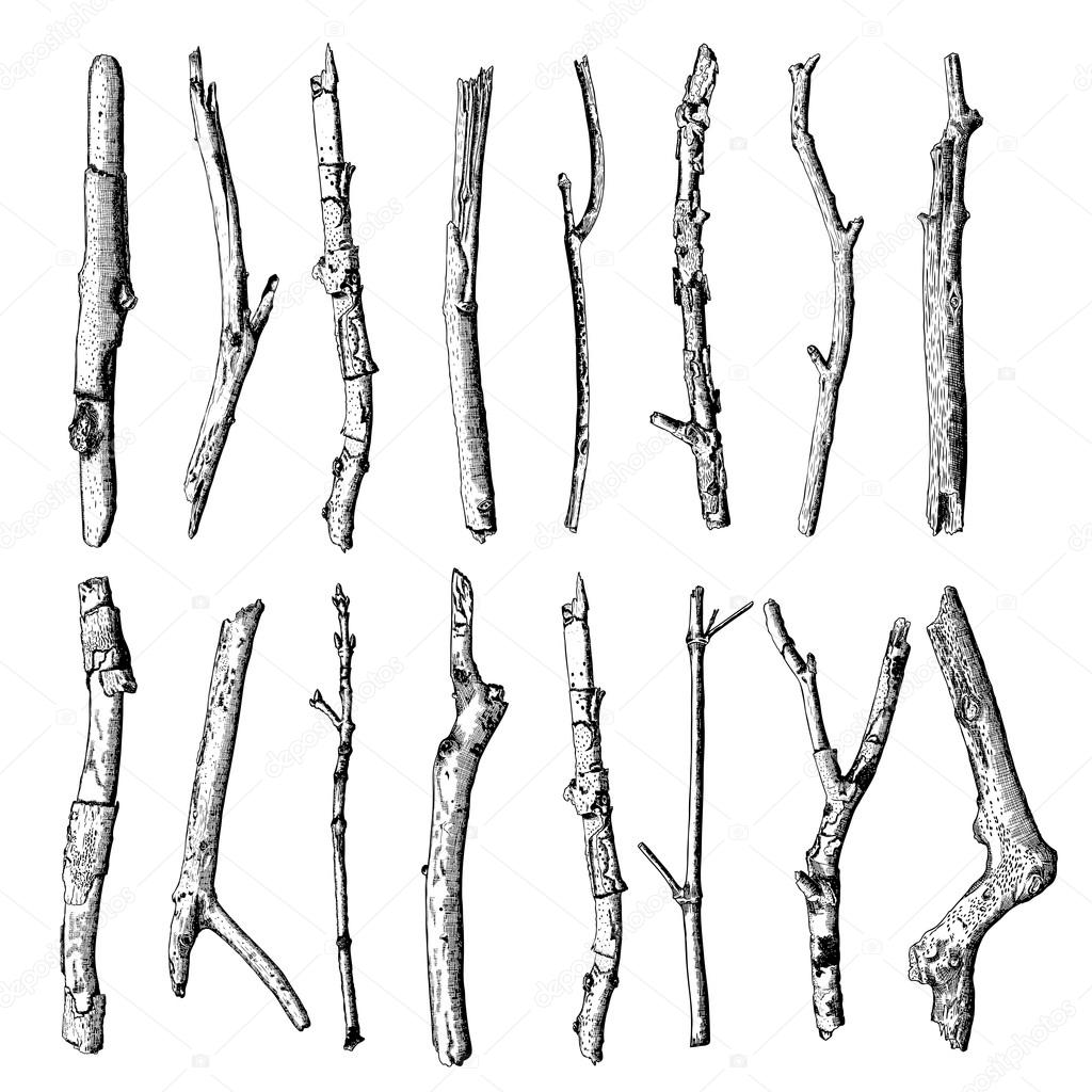 Hand drawn wood twig,  ink rustic design element.