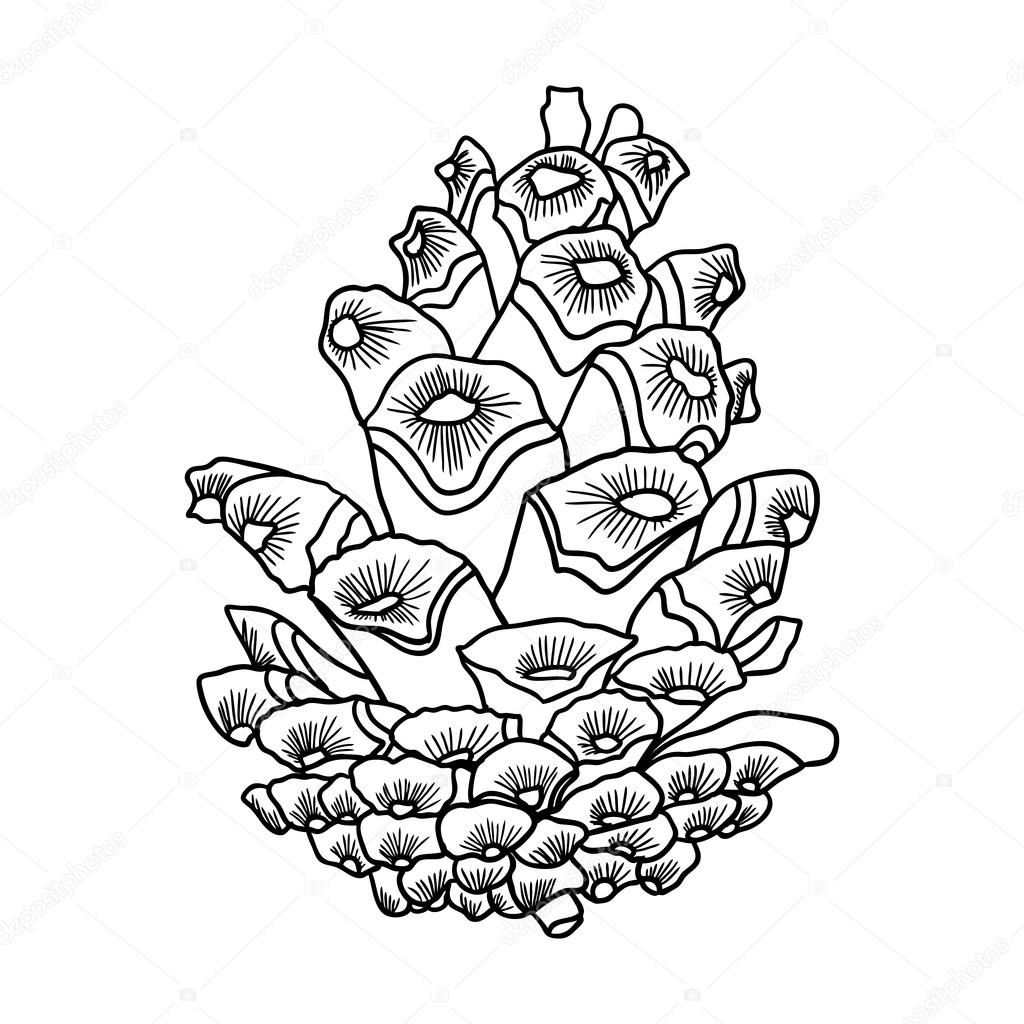 Hand Drawn Pinecone Stock Vector C Goldenshrimp 124774238