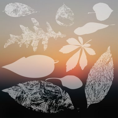 Leaf silhouettes collection
