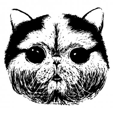 Portrait of British Short-hair Cat.
