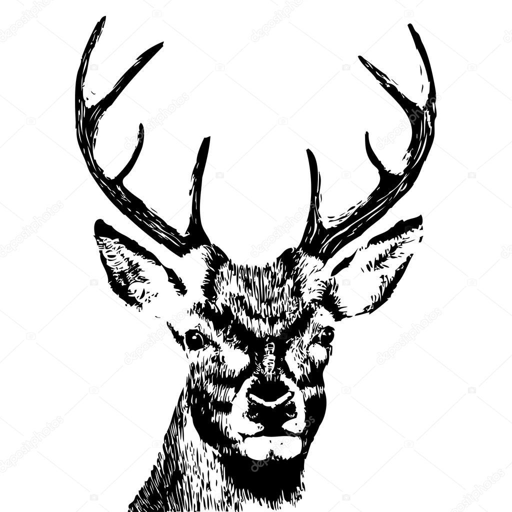 Disegnato a mano testa di cervo vettoriali stock for Immagini vector