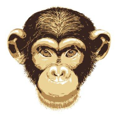 Vector image of monkey