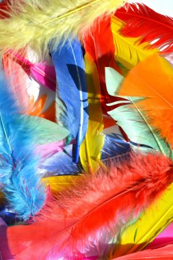 feathers background texture