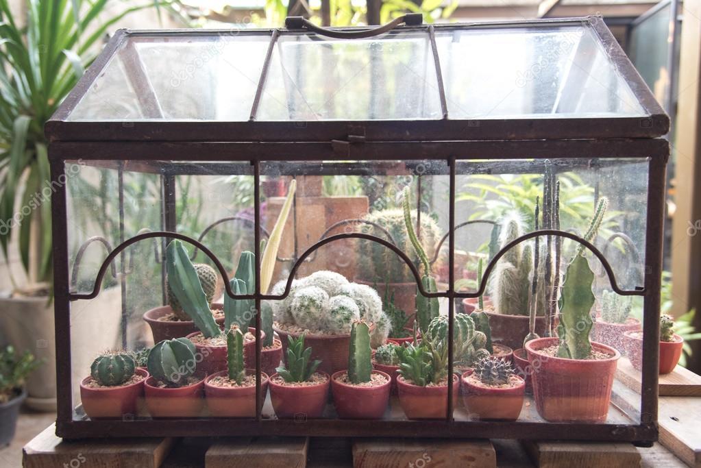 Cactus Terrarium Stock Photo C Aon168 70992213