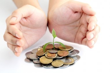 Hands protecting green tree growing on money coins