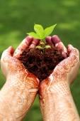 Fotografia mani che tengono piccola pianta - nuova vita