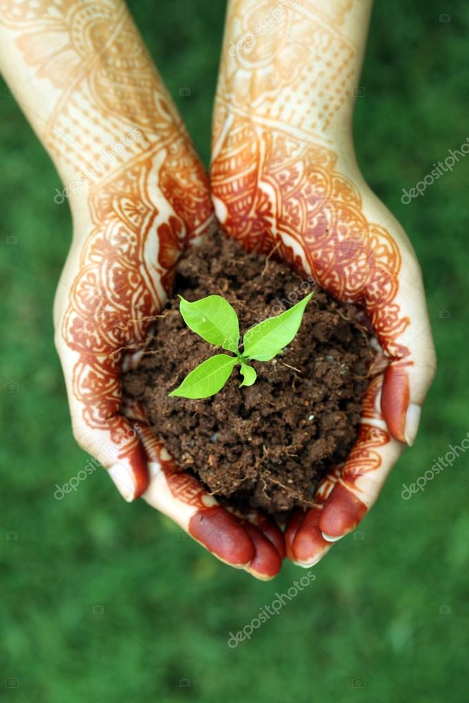 Hands holding small plant - New life
