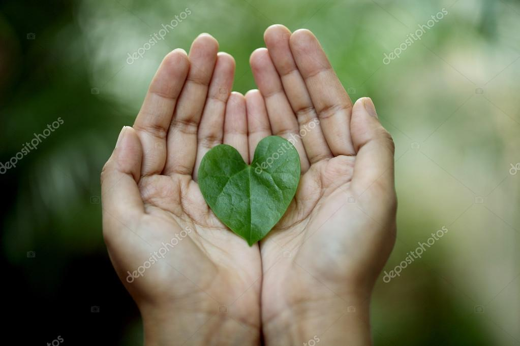 Hands holding a heart shaped green leaf