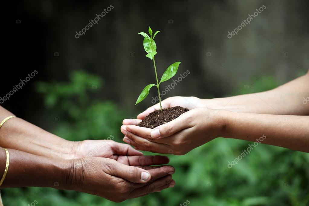 Young hands giving plant