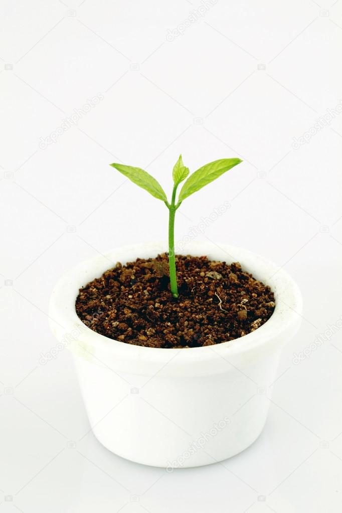Baby plant growing in a pot