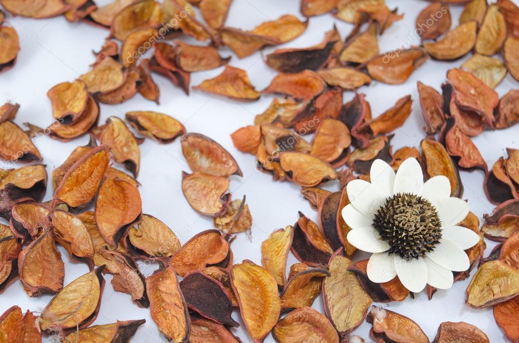 Getrocknete Blätter orange und eine große weiße Blume — Stockfoto ...