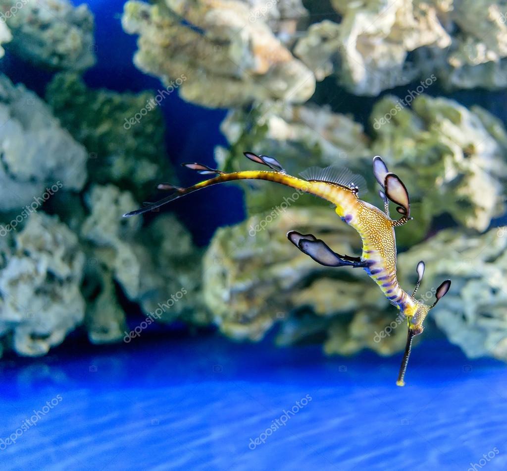 Ungewöhnliche Formen und Farben, die Einwohner von Meer und Ozean ...