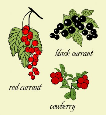 Vector Set of doodle berries:  black currant, red currants, cowberry