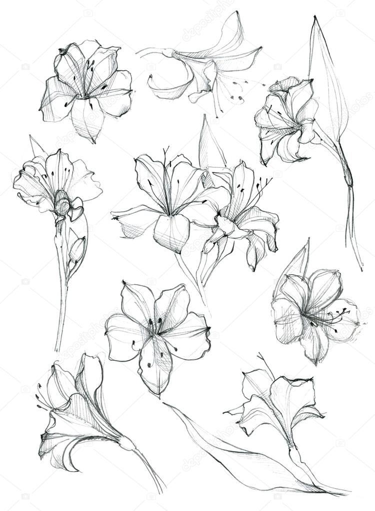 Hand-drawn set of flowers sketches